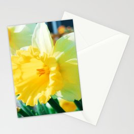 Closeup Narcissus 3 Stationery Cards