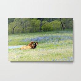 Horses & Bluebonnets Metal Print