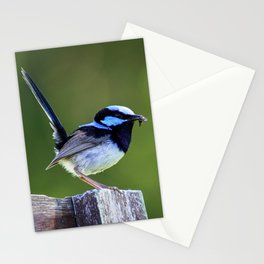 Superb Fairy-Wren Stationery Cards