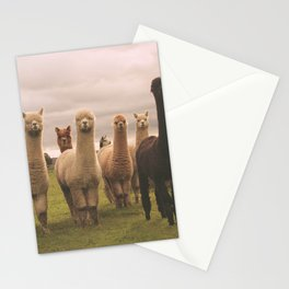 Alpacas at Tio Farm Stationery Cards