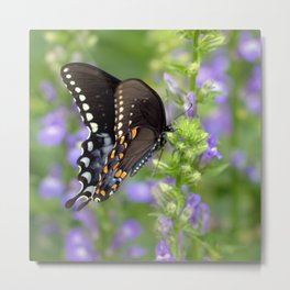 Swallowtail Sunshine Metal Print