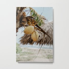Coconut Palm Love Metal Print