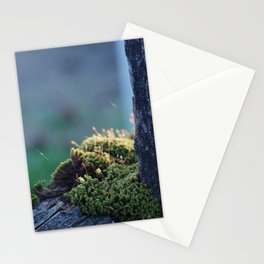 Beauty of a Mossy Fence Stationery Cards