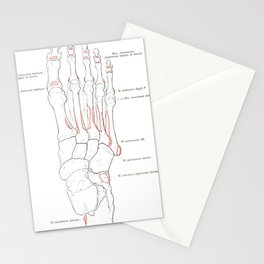 Spalteholz' Hand-Atlas of Human Anatomy (1906) - Bones of the Right Foot Stationery Cards