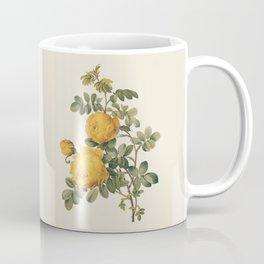 Yellow Rose Antique Botanical Illustration Coffee Mug
