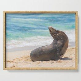 Sea lion sunbathing on beach Serving Tray