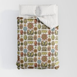 Ernst Haeckel Ascidiae Sea Squirts White Background Comforters