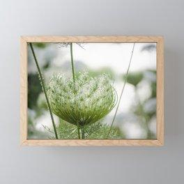 Wild Carrots Framed Mini Art Print