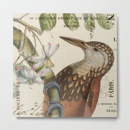 Flicker  with Cherry Blossoms Metal Print