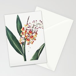 The Nodding Renealmia Illustration by Robert John Thornton Stationery Cards
