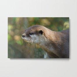 Otter In The Sun Metal Print