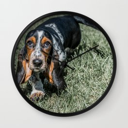Basset Hound Puppy Droopy Ears Walking in Green Grass Cute Adorable Dog Photography Wall Clock
