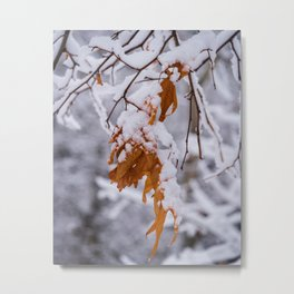 Oak Leaf in the Snow Nature Photography Metal Print