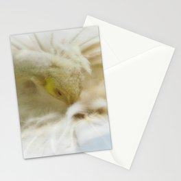 Beautiful White Peacock Stationery Cards