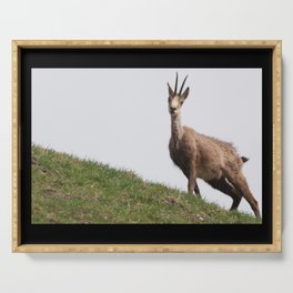 Chamois Alps Goat Capricorn Deer Nature Wildlife Serving Tray