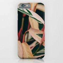 Stromanthe Triostar iPhone Case