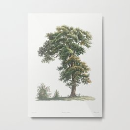 Vintage Oak Tree Poster Metal Print
