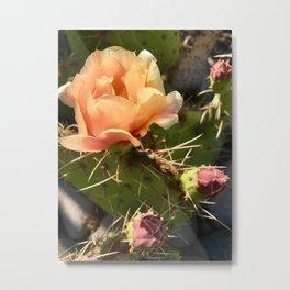California Desert Bloom Metal Print