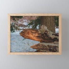 Fallen and Broken Tree  Framed Mini Art Print