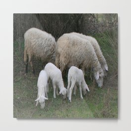 The Really Ewesful Company Metal Print