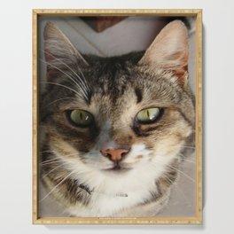 Tabby Cat Kitten Giving Eye Contact Serving Tray