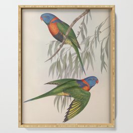 Red-collared Lorikeet, trichoglossus rubritorquis3 Serving Tray