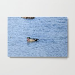 Mr. Wood Duck Metal Print