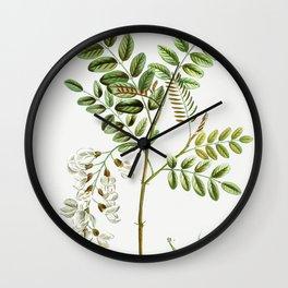 Black locust (Robinia pseudoacacia) from Traite des Arbres et Arbustes que lon cultive en France en Wall Clock