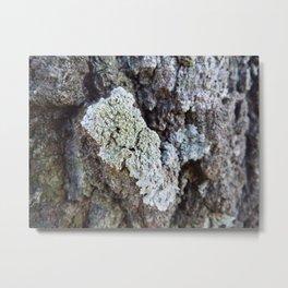 Oak bark Metal Print