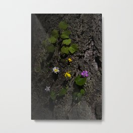 Oregon Spring Wildflowers Between Bark in Afternoon Light Metal Print