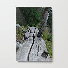 Uintas National Forest Metal Print