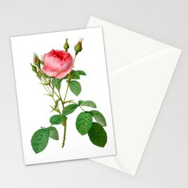 Antique Heirloom Cabbage Rose Hand-colored Copperplate Engraving Original Aquatint Watercolor PNG 1 Stationery Cards