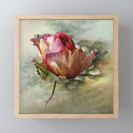 The Last Rose of Summer Framed Mini Art Print