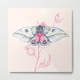 Pink Moth on a Rosehip Brunch. Butterflies, insects, bugs. Metal Print