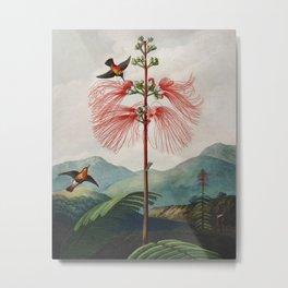 Robert John Thornton - Large–Flowering Sensitive Plant Metal Print