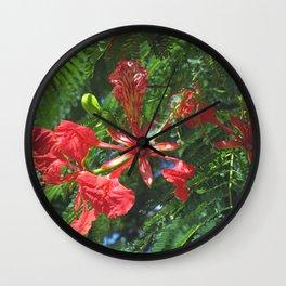 Royal Poinciana - Delonix regia Wall Clock