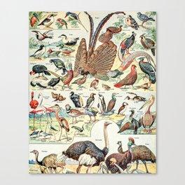 Wild Birds // Oiseaux by Adolphe Millot XL 19th Century Science Textbook Diagram Artwork Canvas Print