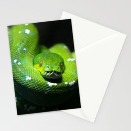 Green tree python (Morelia viridis), on a tree branch, dark background Stationery Cards