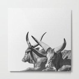 Animal Photography | Ankole-Watusi | Cattle | Bull | Steer | Black and White Metal Print