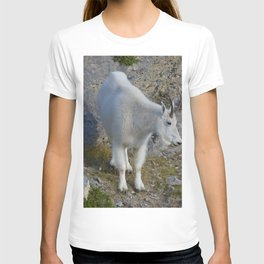 Mountain goat in the Canadian Rocky Mountains T-shirt