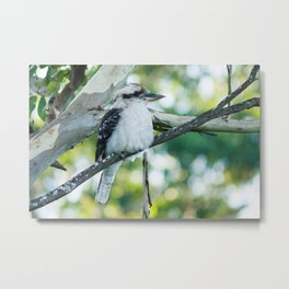 Laughing Kookaburra Metal Print