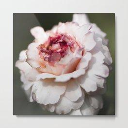 October rose Metal Print