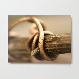 Winter Grapevine Tendril Macro Metal Print