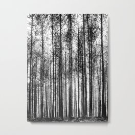 trees in forest landscape - black and white nature photography Metal Print