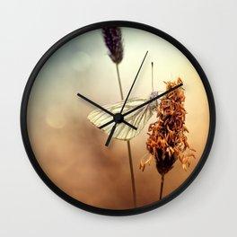 A Green-veined White (Pieris napi)...  Wall Clock