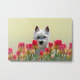white Fox terrier between red orange tulips Metal Print