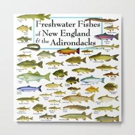 Illustrated New England and  Adirondacks Game Fish Identification Chart Metal Print