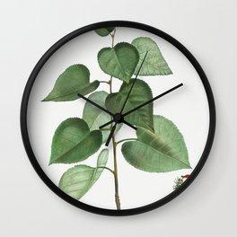 Robinia caragana from Traite des Arbres et Arbustes que lon cultive en France en pleine terre (1801- Wall Clock