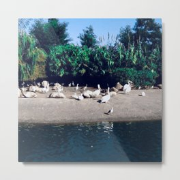 Birds photography in the wild life  Metal Print