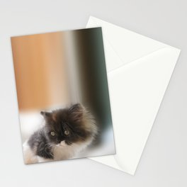 Nano Baby Kitten Stationery Cards